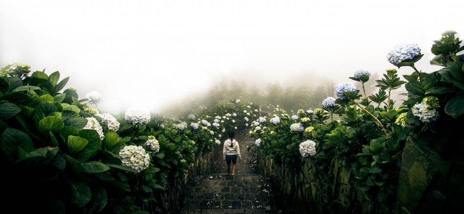 woman walking down steps surrounded by flowers and fog