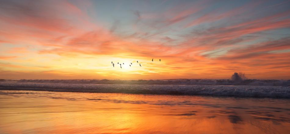 birds flying at sunrise over ocean