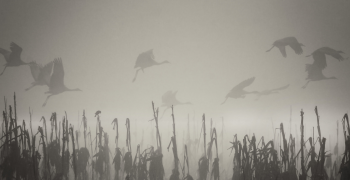 birds flying through fog